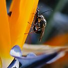 Insects in Prospect by yewenyi