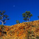 Gums on the Gorge by Bette Devine