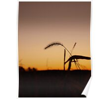 Wheat Stalk at Sunrise Poster