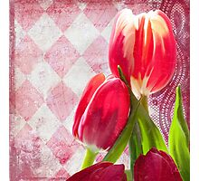 Hot pink and cream tulips, vintage writing, Harlequin print Photographic Print