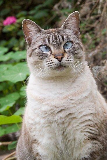 Cross-eyed cat by Robert Down