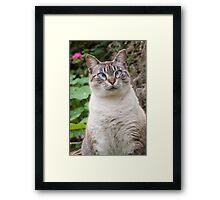 Cross-eyed cat Framed Print