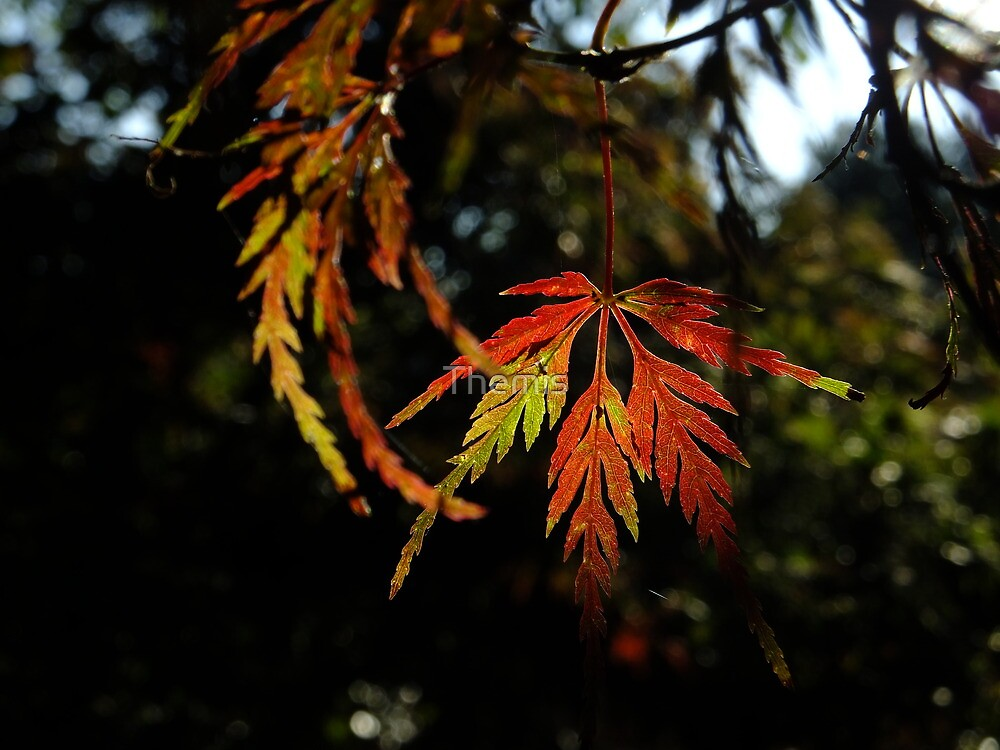 Autumn Leaf, Clinging On by Themis