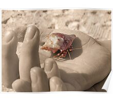 Hermit Crab in Hand Poster