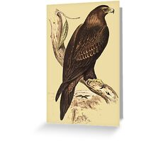 Wedge-Tailed Eagle. Australia's largest bird of prey Greeting Card