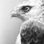 Raptor by BKSPicture