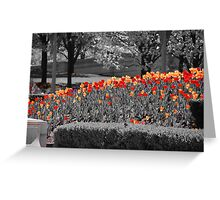 Chicago Tulips Greeting Card