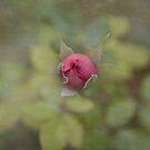 Little Rosebud by Lynn Starner