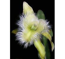 Amazing Orchid Photographic Print