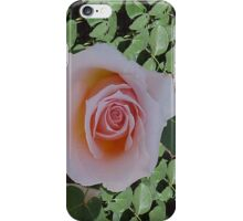Peach Roses... iPhone Case/Skin