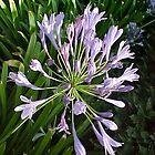 Purple Flower 2-H... by Photos55