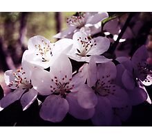 Cherry Blossom ~ Floral Photography Photographic Print