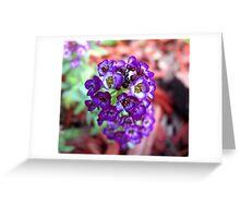 Purple Alyssum Greeting Card