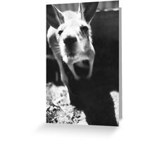 Abandoned Joey Greeting Card