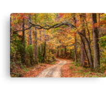Tangled Limbs and Fallen Leaves Canvas Print