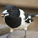 Cheeky Butcher Bird  by Margaret Stanton