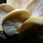 Fantastic Fungus by WildestArt