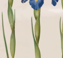 Johannes Simon Holtzbecher Iris xiphioides Sticker