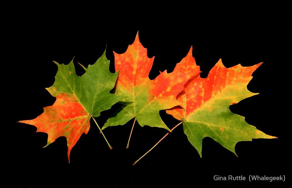 An Autumn Memory by Gina Ruttle  (Whalegeek)