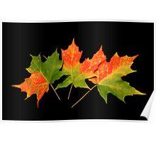 An Autumn Memory Poster