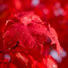 Autumn Dew by Nick Boren