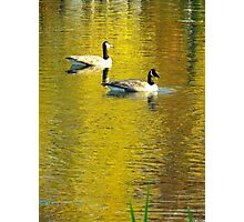 Canadian geese, New York City  Photographic Print