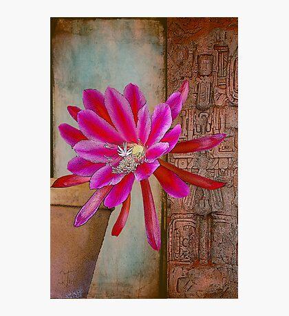 Ancient Secret of the Flower Photographic Print