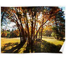 Autumn's Golden Rays  Poster