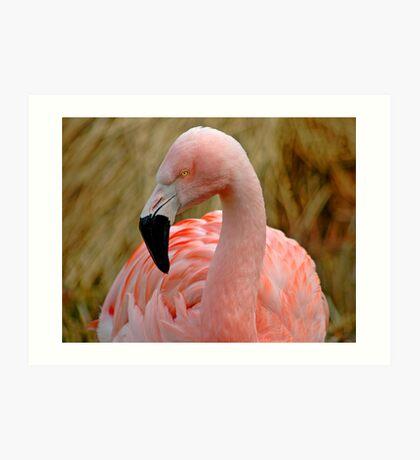Flamingo 1 Art Print