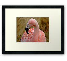 Flamingo 1 Framed Print