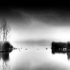 B&W Day... by Tania Koleska