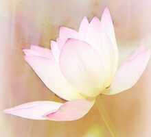 Waterlily by Chanel70