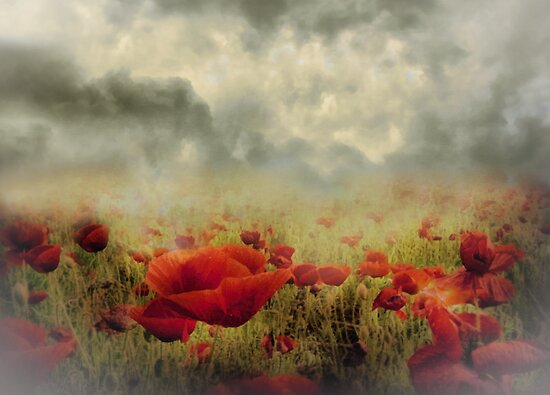 Poppies From Heaven by Romanovna Fine Art Prints