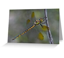 Nature on Show Greeting Card