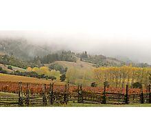 Mendocino Vineyard Photographic Print