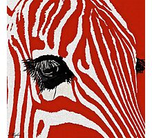 Zebra Red  Photographic Print