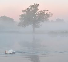 Heron Pond at Dawn by Kasia Nowak