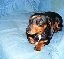 Otis the Dog by tusitalo