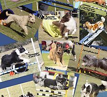 DOG AGILITY IN NSW by caninefunsports