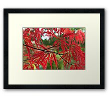 Red In The RAW Framed Print