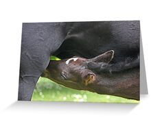 """""""Hungry Baby...."""" Greeting Card"""