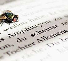 Literate Fly by Marcel Rainer