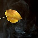 smoke and falling leave by Mustafa UZEL