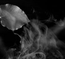smoke and falling leave 2 by Mustafa UZEL