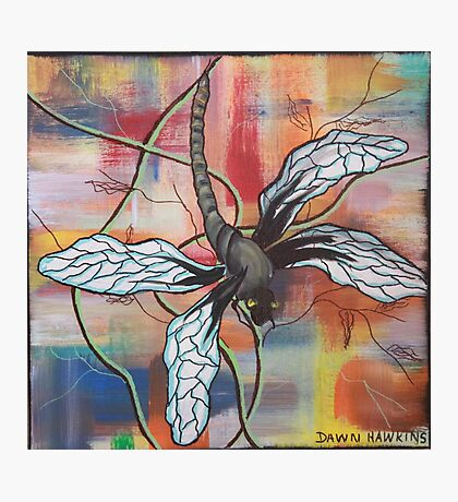 Kris the dragonfly Photographic Print