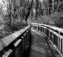 Forest Boardwalk by Tracy Friesen