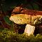 RUSSULA by Sandy Stewart