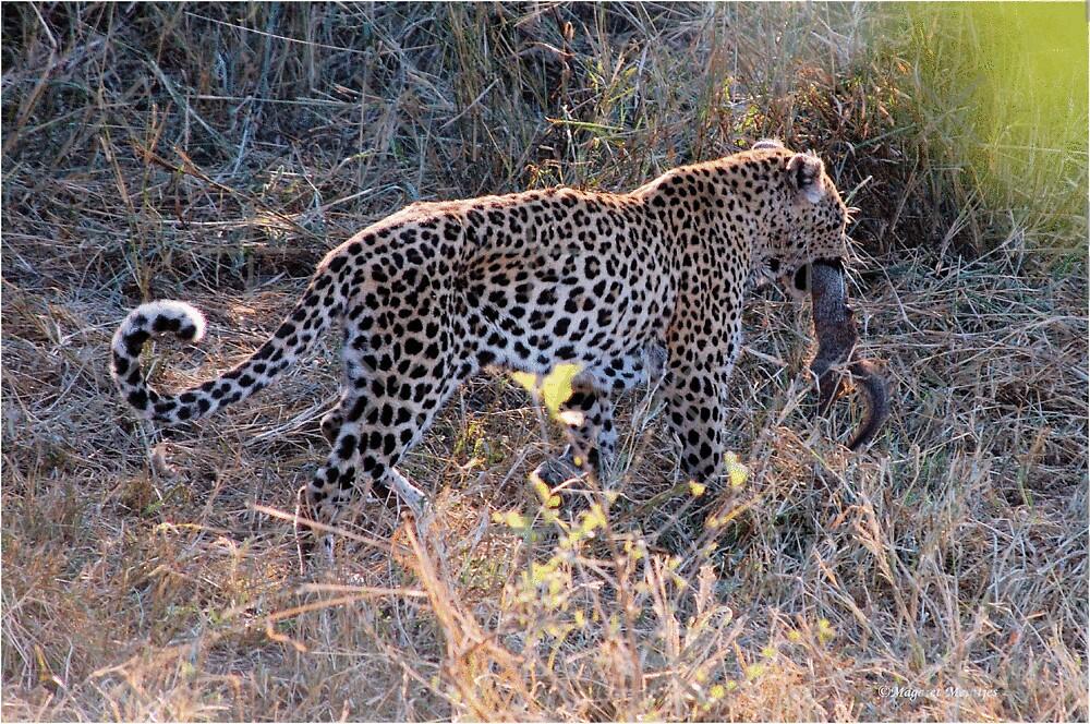 JUST A TINY BITE TO EAT ! - THE LEOPARD – Panthera pardus by Magriet Meintjes