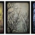 Backyard Birds X 3 by Rene Hales