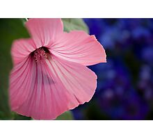 Bloomed Artic Flower Photographic Print